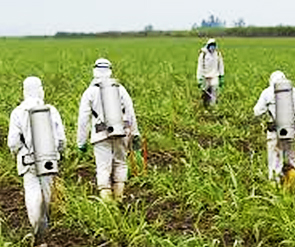 Food crops being sprayed with Roundup. Does this look safe?